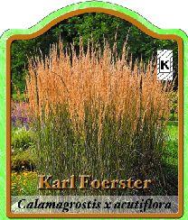 calamagrostis acutiflora 39 karl foerster 39 reitgras winterharte stauden f r lebendige g rten. Black Bedroom Furniture Sets. Home Design Ideas